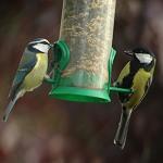 سرشماری پرندگان در بلژيک آغاز شد